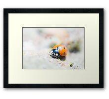 Super Up-close Ladybird Framed Print