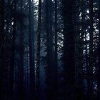 Duskwood Forest by Brandt Campbell