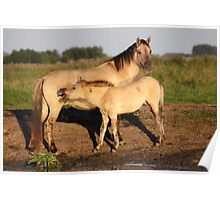 Konik Horse with Foal Poster