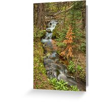 Rusty The Pine Tree and The Flowing Stream Greeting Card