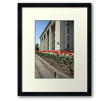 tulips City Springtime Framed Print