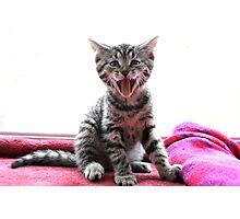 HAHA Funny Face! Photographic Print