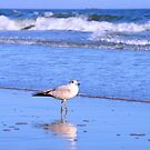 Seagull And The Surf by ©Dawne M. Dunton