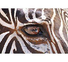 Animal`s sight.  Photographic Print
