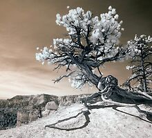 Bryce Canyon Tree Sculpture by mikeirwin