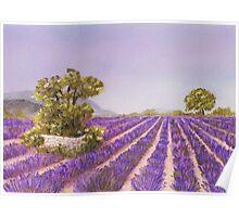 Drome Provence Poster