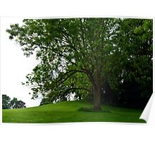 Cherry Hill Tree Poster