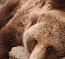 Bears in Dreamland Sticker