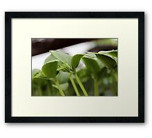 Small Cucumber Plant Framed Print