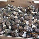 Mushrooms at Farmers Market, Milwaukie, OR by AuntieBarbie