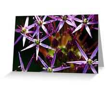Starry Allium Abstract Greeting Card