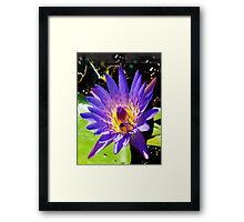 Purple water lily vertical view Framed Print