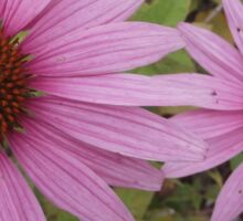 Coneflowers Sticker