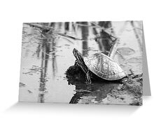 Painted Turtle Reflection Greeting Card