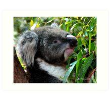 Koala - PA Art Print