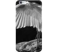 Preening Great Egret  iPhone Case/Skin