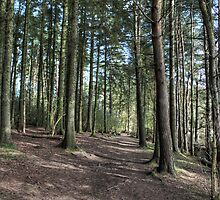 Beecraigs Wood by Tom Gomez