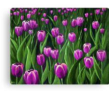Purple Tulip Field Canvas Print