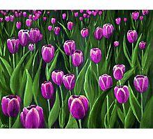 Purple Tulip Field Photographic Print