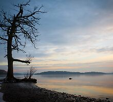 Silhouetted Tree by sasshaw