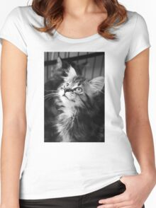 Kitten looking up (Clothing Products) Women's Fitted Scoop T-Shirt