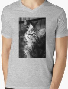 Kitten looking up (Clothing Products) Mens V-Neck T-Shirt