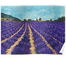 Lavender Afternoon Poster