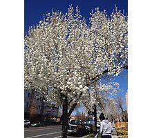 City Spring Photographic Print