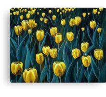 Yellow Tulip Field Canvas Print