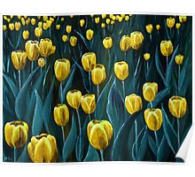 Yellow Tulip Field Poster