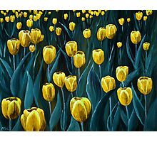 Yellow Tulip Field Photographic Print