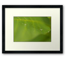 Rain drop on a green leaf Framed Print