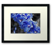 Touch of Blue Delphinium Framed Print
