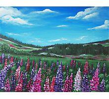 Lupine Hills Photographic Print