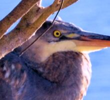 The Great Blue Heron Sticker