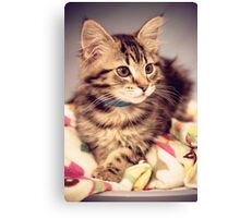 Tabby kitten in vintage colours Canvas Print
