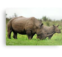 MOTHER & CALF - White Rhinoceros - Ceratotherium sumum -WIT RENOSTER Metal Print