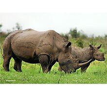 MOTHER & CALF - White Rhinoceros - Ceratotherium sumum -WIT RENOSTER Photographic Print