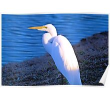 The Great White Egret Poster
