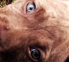 Blue eyed beauty Sticker