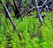 A Fine Forest of Horsetail Herb by Kathleen Daley