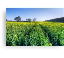 Brassica Napus. Canvas Print