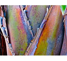 """Palm Abstract III"" Photographic Print"