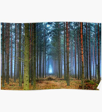 Pine Forest in Morning Fog. Poster