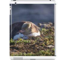 Yellow Eyed Penguin iPad Case/Skin