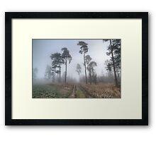 Forest Track in Mist. Framed Print