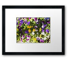 Pansies of Violet and Yellow Framed Print