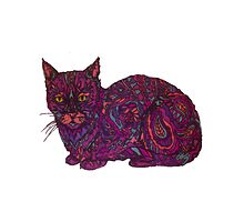 color cat  by Audrey Metcalf
