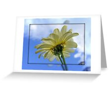 DAISY Reaching for the Sky !!! Greeting Card