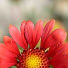Love`n Heart Of a Daisy by HanieBCreations
